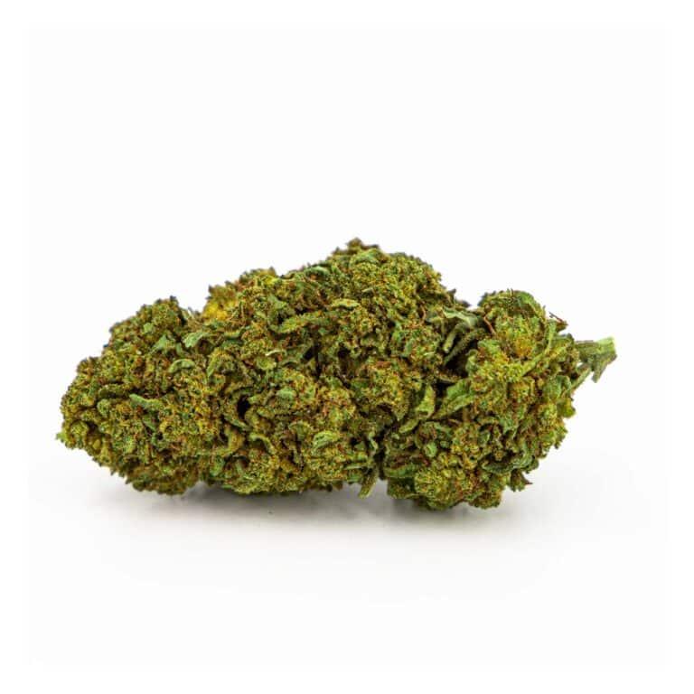 Cookie Kush Fleur CBD, une variété très appréciée des amateurs de CBD